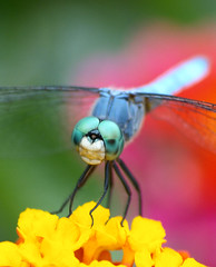 The Dragonfly (jhhwild) Tags: bug insect dragonfly national geographic topic naturesfinest photoskillz