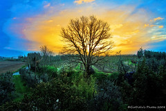Tree Of Life (Picture Effect) (Giodinu) Tags: f5 hdr 17mm castelnuovoberardenga tamron1750mmf28
