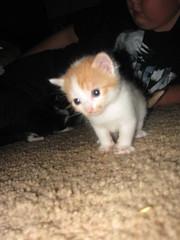 kittens 074