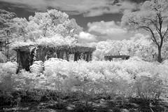 Buried Under Foliage (Shawn O'Connell Photography) Tags: trees blackandwhite bw rose digital garden ir texas infrared botanic botanicgarden rosegarden fortworth top20texas bestoftexas shawnoconnell shawnoconnellphotography