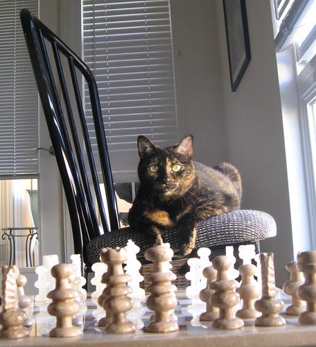 Hildy: Chessmaster
