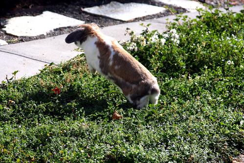 Cashew Demonstrates the High Jump