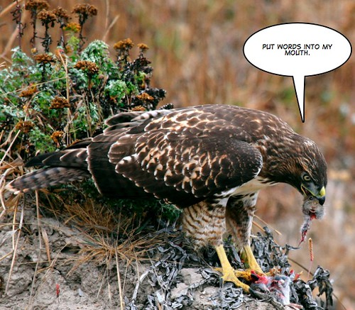 Hawk Eating Vole II