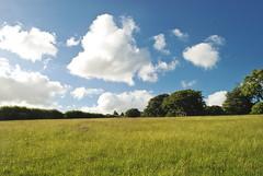 Dartmoor Landscape (Daniele Sartori) Tags: park uk england sky parco tree nature field landscape nikon europa europe day cloudy hill natura cielo campo albero dartmoor paesaggio collina inghilterra d80 nikond80