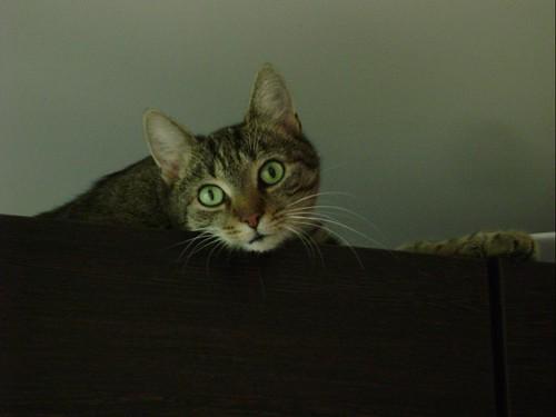Salome 2008 08 23