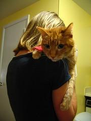 Bibs (spookythecat) Tags: kitties critters shari bibs