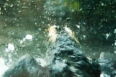 Seattle_3397 (absencesix) Tags: seattle travel nature birds animals aquarium washington unitedstates events may noflash puffin northamerica captive 2008 locations iso1600 seattleaquarium 70200mm locale 70mm manualmode canoneos30d geocity camera:make=canon exif:make=canon exif:iso_speed=1600 exif:focal_length=70mm may22008 summer2008travel selfrating0stars 1250secatf40 geostate geocountrys exif:model=canoneos30d camera:model=canoneos30d exif:lens=7002000mm exif:aperture=40 assortedevents subjectdistanceunknown seattleaquariumtrip05022008