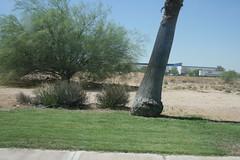 2008_Tucson_052 (emzepe) Tags: arizona usa tree america us interesting bush desert tucson united si az system metric trunk states root amerika 2008 19 mile kirnduls bokor nagy i19 rdekes nyr amerikai jnius i gykr f sivatag kilomter trzs fatrzs gyep rendszer egyeslt llamok mrfld dlnyugati