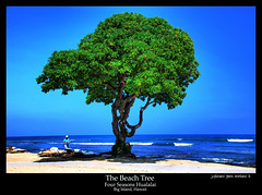 The Beach Tree Four Seasons Hualalai Big Island Hawaii (j glenn montano 3) Tags: tree beach island four hawaii big seasons glenn historic 1001nights montano hualalai the kaupulehu justiniano aplusphoto colourartaward
