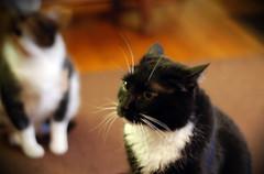 pike and fletcher (jreidfive) Tags: cats field fletcher virginia focus downtown roanoke pike depth