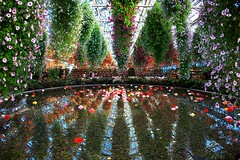 Flower garden (harvest_ja*) Tags: flower canon reflections 5d platinumphoto ultimateshot favoritegarden latinumphoto