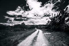 The Silver Path (Tarzan!!!) Tags: road blackandwhite cloud blancoynegro mexico driving camino nube hidalgo manejando huasteca zimapan ltytr1 attheroad
