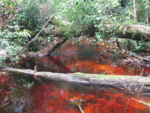 Some of the streams in Kailo run red