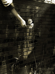 Let me Show you the way (Nika Fadul) Tags: light flower brick muro wall hand galhos mnicafadul nikafadul