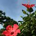 亜熱帯の花