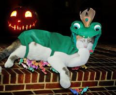 Cat Costume ~(CatChallenge61)~ (Gravityx9) Tags: halloween cali photoshop fluffy chop multicolored magical amer mii blogthis smorgasbord zazzle 1008 whathaveyoudone creativephoto mii4 redbubble catchallenge catcrazypeople 101208 102808 yourpreferredpicture petpicsthatwowus colouryourlife photographersgonewild catnipaddicts meowwow catchallenge61