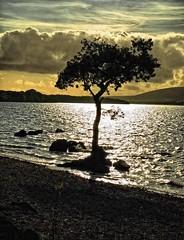 Alone (Scottish Nomad) Tags: wow scotland lochlomond abigfave anawesomeshot colorphotoaward treesubject millarochybay