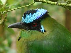 La Soledad (Fernando Alberto Restrepo L.) Tags: bird birds animals colombia aves ave animales antioquia rionegro photoshopcreativo
