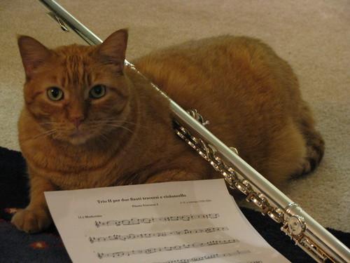 Pumpkin hates the flute.