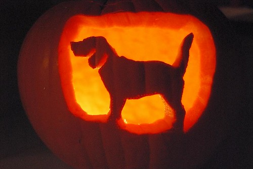 Dog Breed Jack-o-Lanterns (miranadobe) - News & Entertainment ...