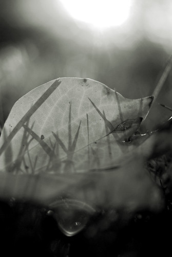 leaves in b&w 2