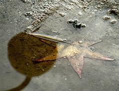 Riflessi su una stella bagnata (fablore[esk ns]) Tags: foglie foglia acqua riflessi lampioni lampione riflesso pozzanghera flickrlovers pscontestriflessi