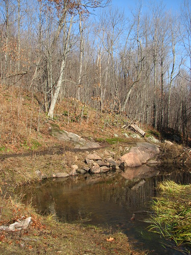 Small pond along the Wolf Trail