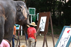 Elephant Art (petercip) Tags: flower art painting thailand canvas elephants trainer preservation selfawareness