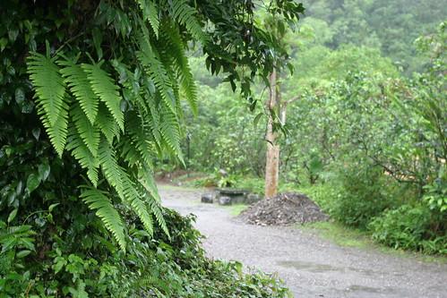 你拍攝的 三富花園農場:雨中小路。