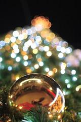 HBW with Early Winter Illuminations (Apricot Cafe) Tags: japan illumination tokyo東京 explored canonef28mmf18usm nightscene夜景 colourartaward goldenheartaward minamimachida南町田 grandberrymallグランベリーモール christmastreeクリスマス・ツリー