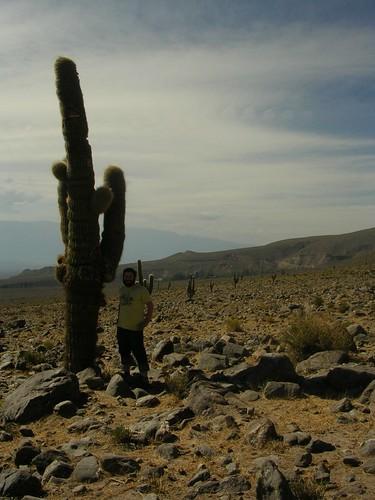 mike & cactus