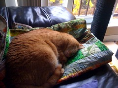 Nemo sleeping on the batik quilt (Claudette in Ottawa) Tags: cat nemo quilt