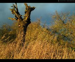 Dead Fields (_David_Meister_) Tags: wood light sky storm tree field grass clouds dark dead dawn licht bush sonnenuntergang himmel wolken gras stumpf tot baum dunkel busch sturm baumstumpf büsche