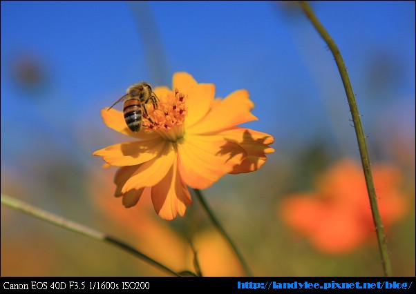 9711-新社花海:Date with Bee_088.jpg