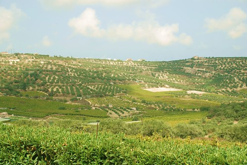 Olive groves and vineyards, Crete