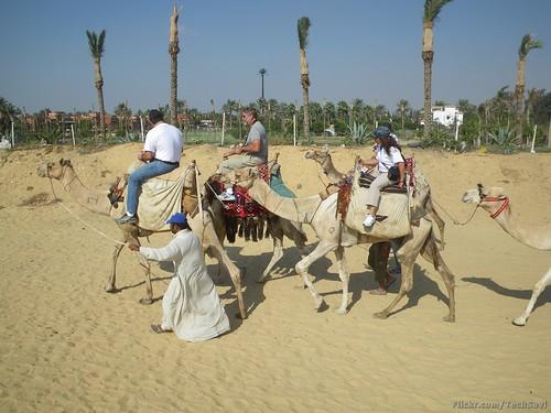 Camel Ride 35