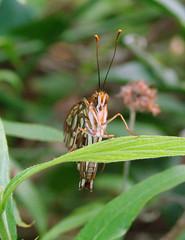 Dsc06481 (boneykingofnowhere) Tags: butterfly zoo sonydsch5