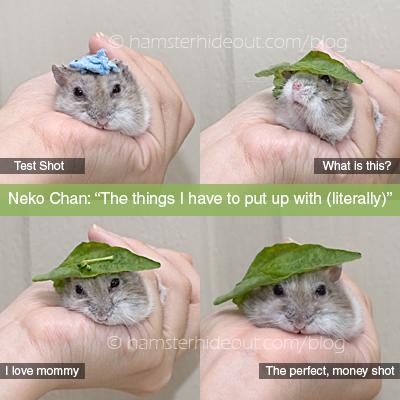 Neko, my dear ham