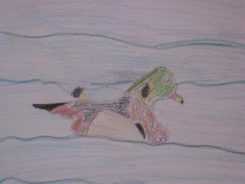 Wood Duck Drawing Close-up