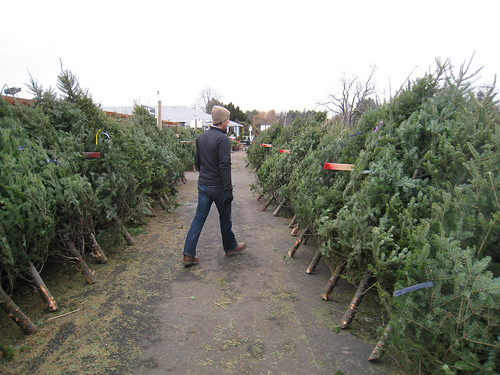 Looking for Christmas Trees