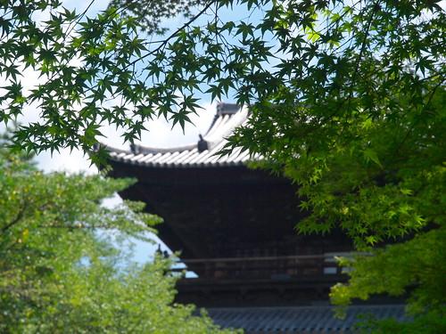 楓.南禅寺