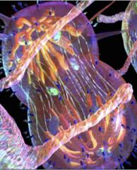 Фото 1 - Обрезание спасает от рака?