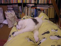 Oimo sleeping on my legs