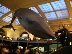 whale and me