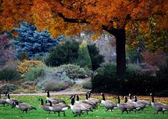 Alton Baker Park (- Ral) Tags: nature oregon aves eugene explore gmt supershot d80 flickrsbest anawesomeshot platinumheartaward 100commentgroup