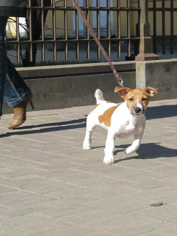 Cute little dog. Spring, Riga, Latvia IMG_0425