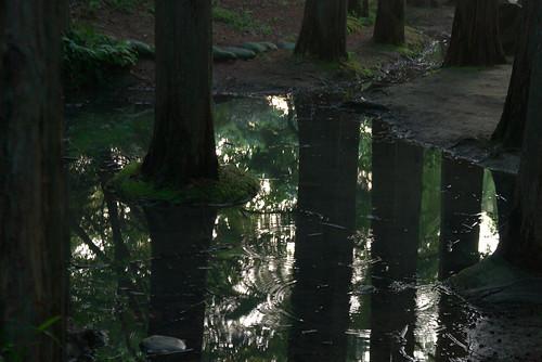 水たまり 生田緑地