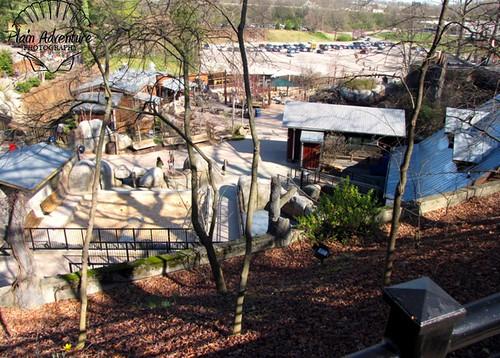 Kidzone Knoxville Zoo watermark