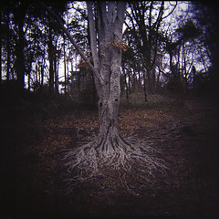 roots (Jorn Ake) Tags: color 6x6 virginia holga walk osanpo maymont poetryreading fuji160s popularink xraydfilm