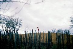 Egyedül / Alone (sskdvd) Tags: trees red clouds analog alone puppet analogue 2008 kiállítás felhők zenite karó pales vörös egyedül borús madárijesztő analóg bábu karók 2kiállítás